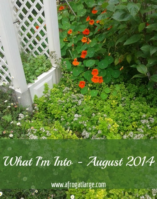 What I'm Into – August 2014 Edition